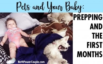 Pets and Your Baby: Prepping and the First Months